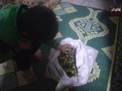 """طفل يجمع غلته من """"عفارة"""" الزيتون في ريف إدلب الجنوبي."""