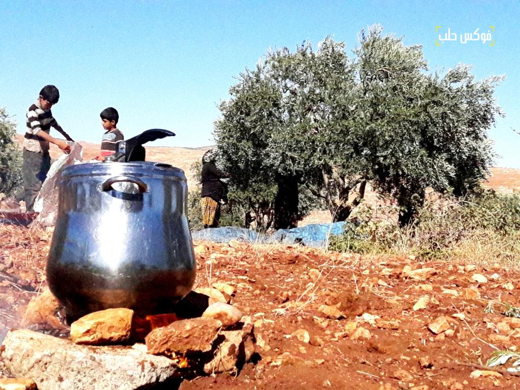 الشاي على الحطب رفيق قطاف الزيتون في ريف ادلب