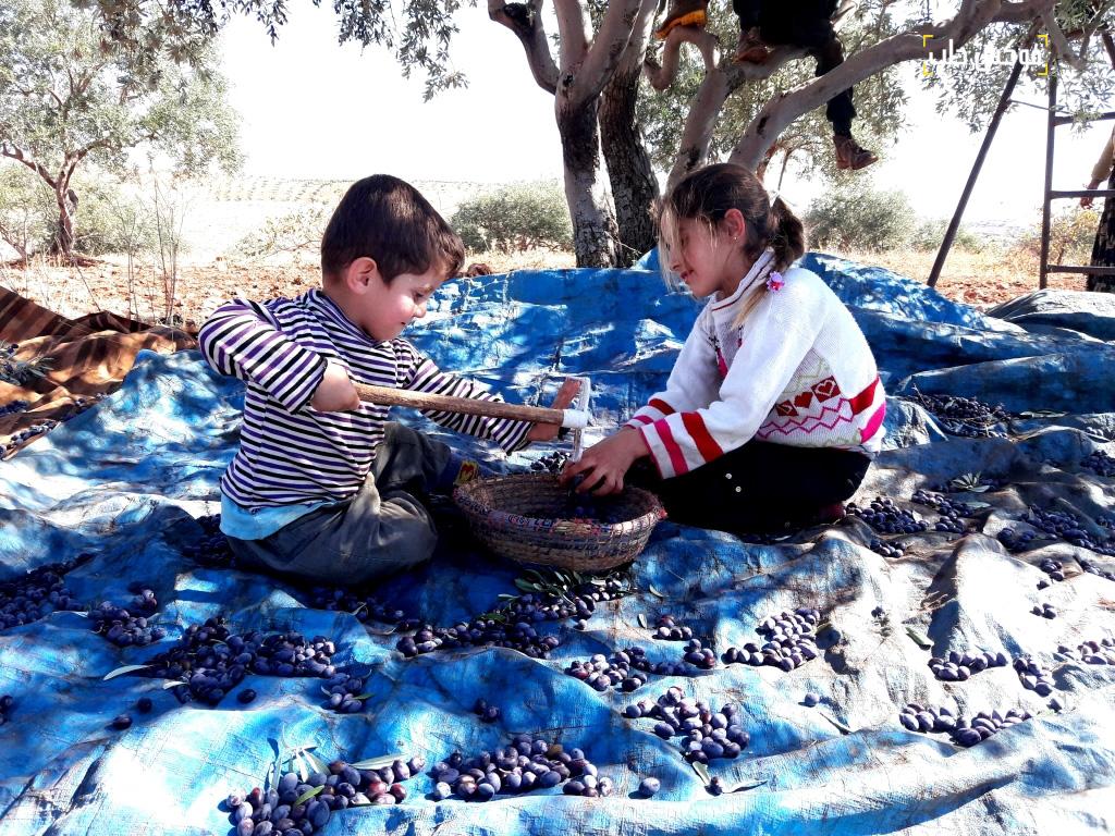 مرح الأطفال في موسم قطف الزيتون قرية ترملا ريف ادلب