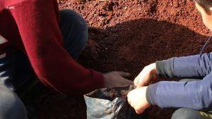 التربة الحمراء الصالحة لزراعة الغراس في المشاتل