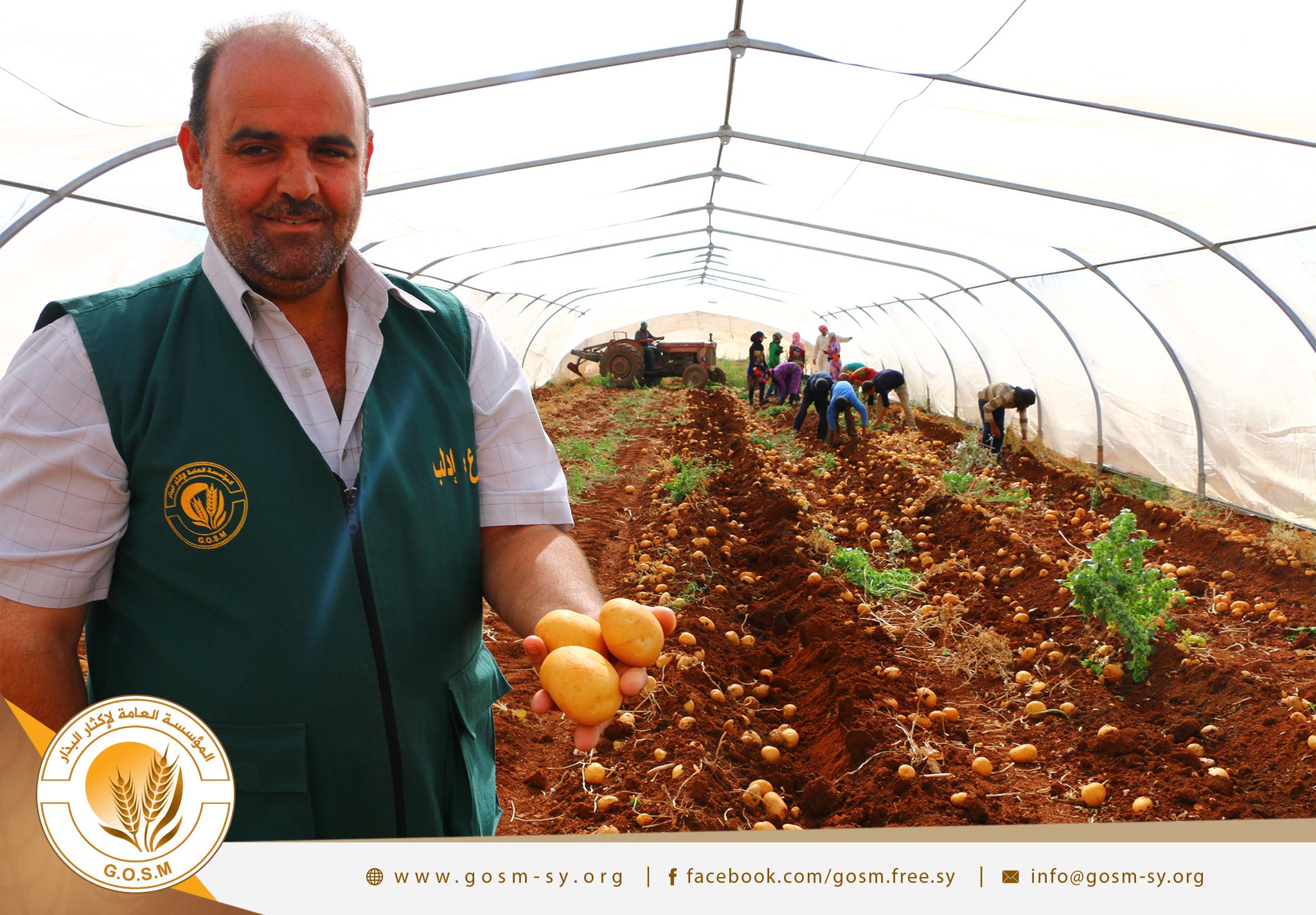 جانب من عمل مؤسسة إكثار البذار في الشمال السوري