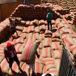 تخزين القمح في مؤسسة إكثار البذار