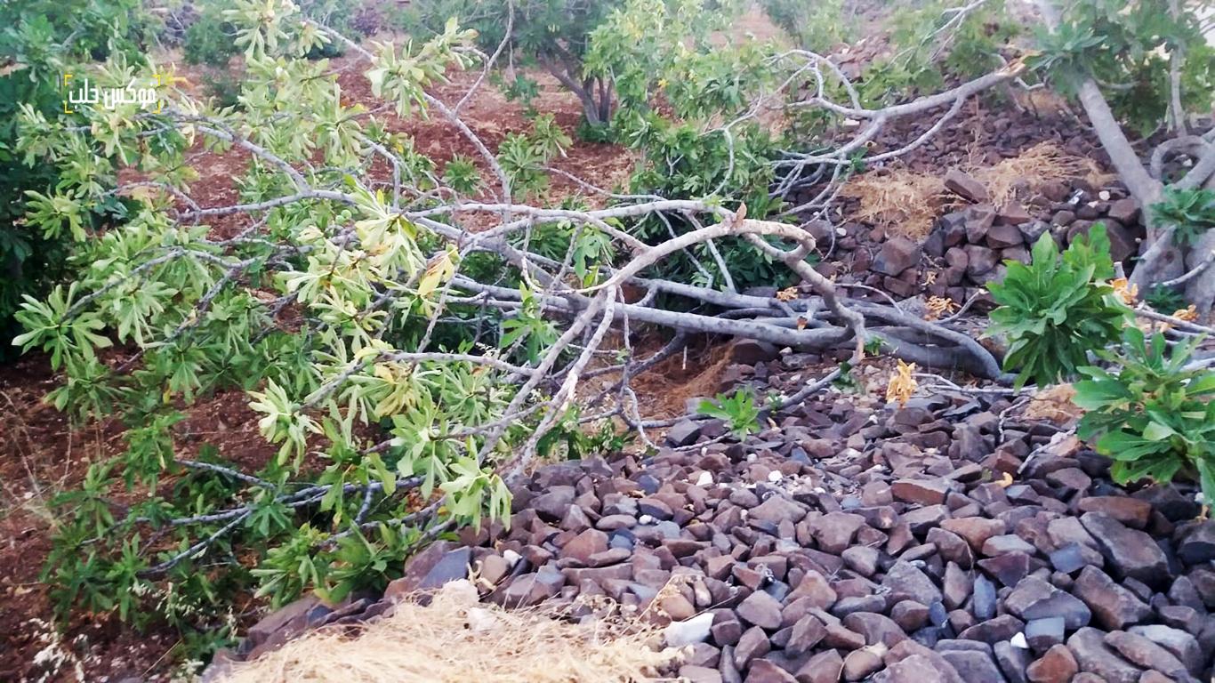 شظايا صواريخ تقطع أشجار التين في حقول ريف إدلب