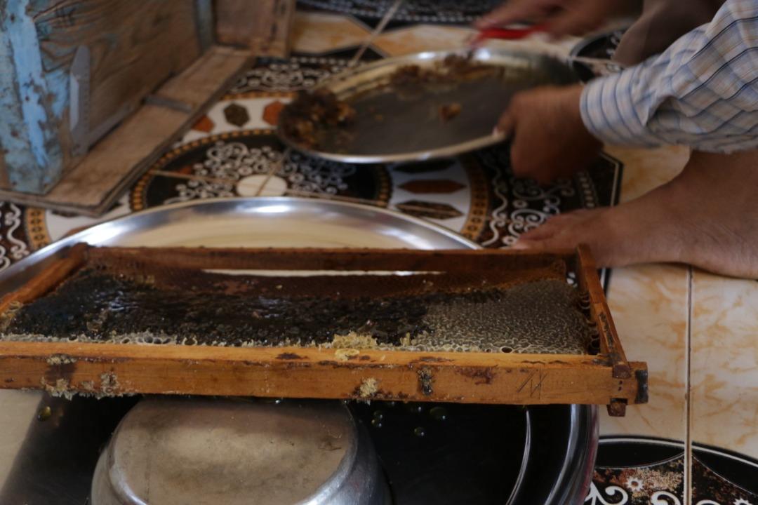 قطف العسل في واحدة من الخلايا بريف حلب الغربي -فوكس حلب