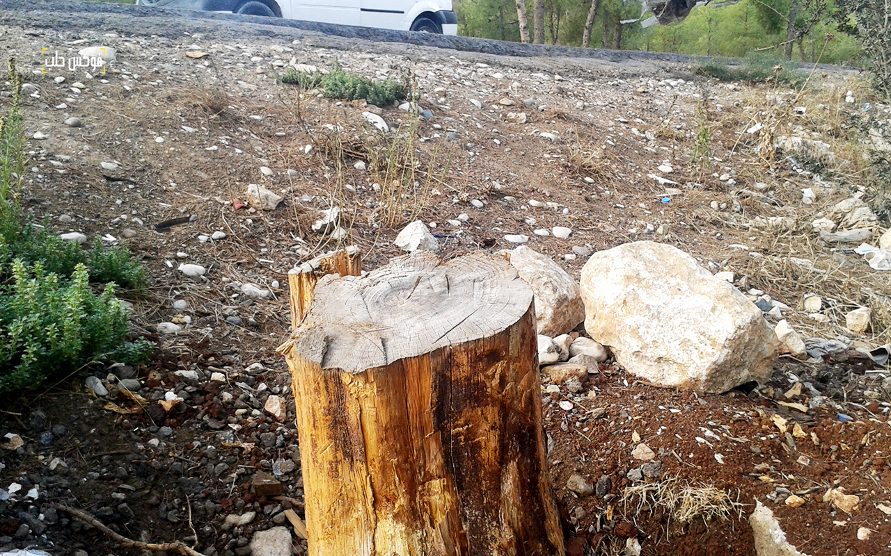 قطع الأشجار الحراجية بريف حلب الغربي