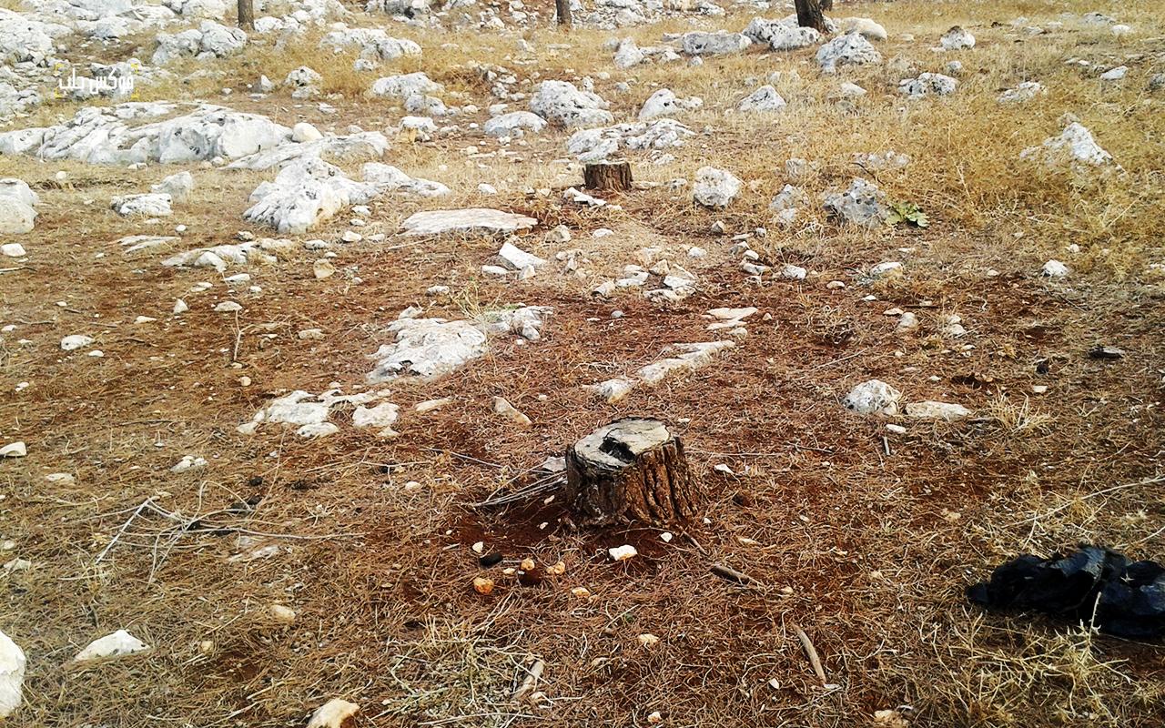 قطع الأشجار بريف حلب الغربي