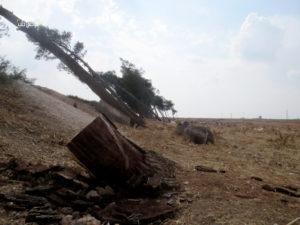 قطع الأشجار على الطريق الدولي لمدينة حلب