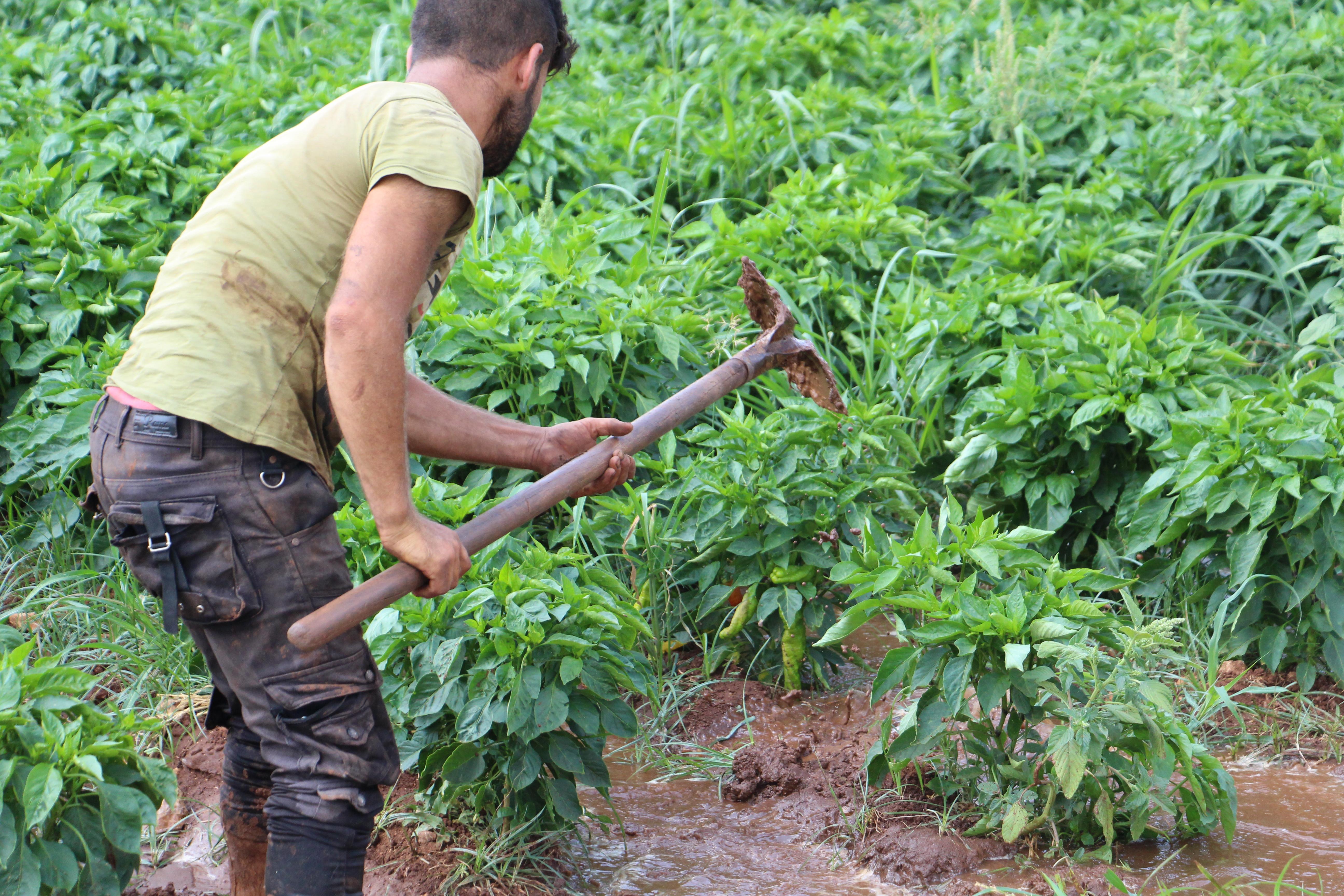جانب من الدعم الزراعي المقدم من منظمة HIHFAD