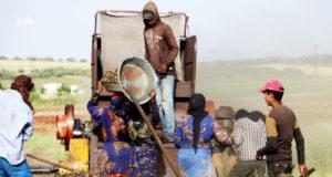 عمال وعاملات مياومة خلال عمليات تحضير الفريكة بريف إدلب