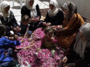 سوريات يعملن على تحضير بتلات الوردة الشامية -المصدر رويترز