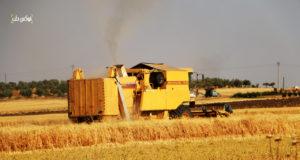 حصاد القمح في محيط قرية زردنا بريف إدلب الشمالي
