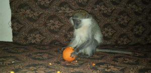 محمية لرعاية الحيوانات في إدلب -المصدر: صفحة الفريق على فيسبوك