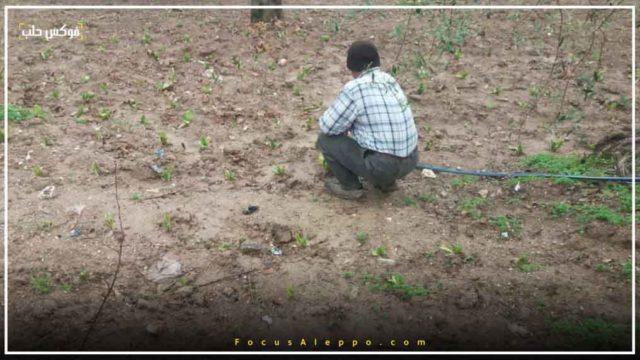 تأخر الأمطار أدى إلى تلف المحاصيل الزراعية في إدلب