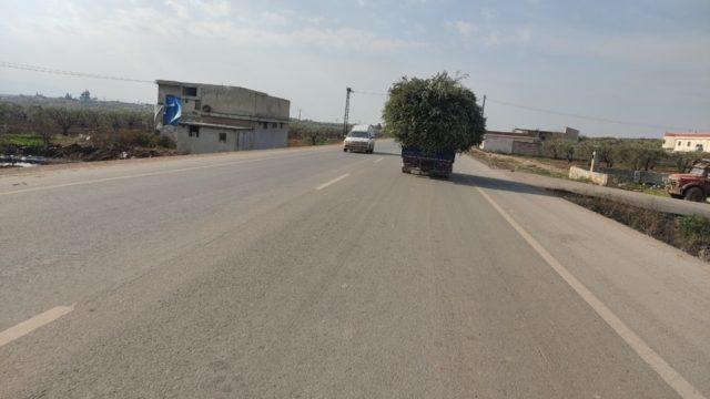 شاحنة محملة بـ أغصان الزيتون في عفرين -فوكس حلب
