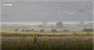 أحد الحيوانات الشرسة بالقرب من الحدود السورية التركية