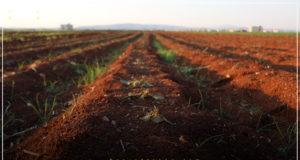 تلف الشتول الزراعية بعد موجة الصقيع التي ضربت مناطق في إدلب