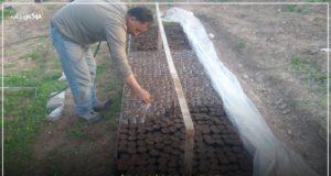 """""""تحضين البذار"""" ضمن المشاتل الزراعية في إدلب"""