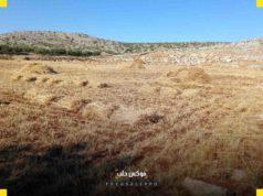 من حصاد البرسيم في إدلب