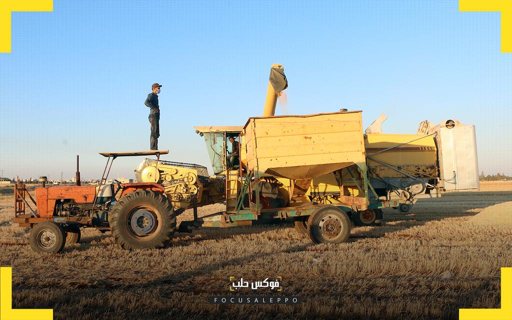 قمح الشمال السوري .. تراجع في المساحات وخسارة سنوية للمزارع