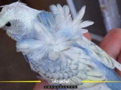 مربو الطيور في إدلب يهجنون أنواعاً جديدة من طيور الزينة